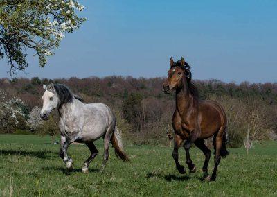 Weisses und Braunes Pferd