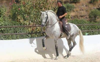 Ein Genuss für Reiter und Liebhaber des feinen Reitens und der klassischen iberischen Reitkunst.