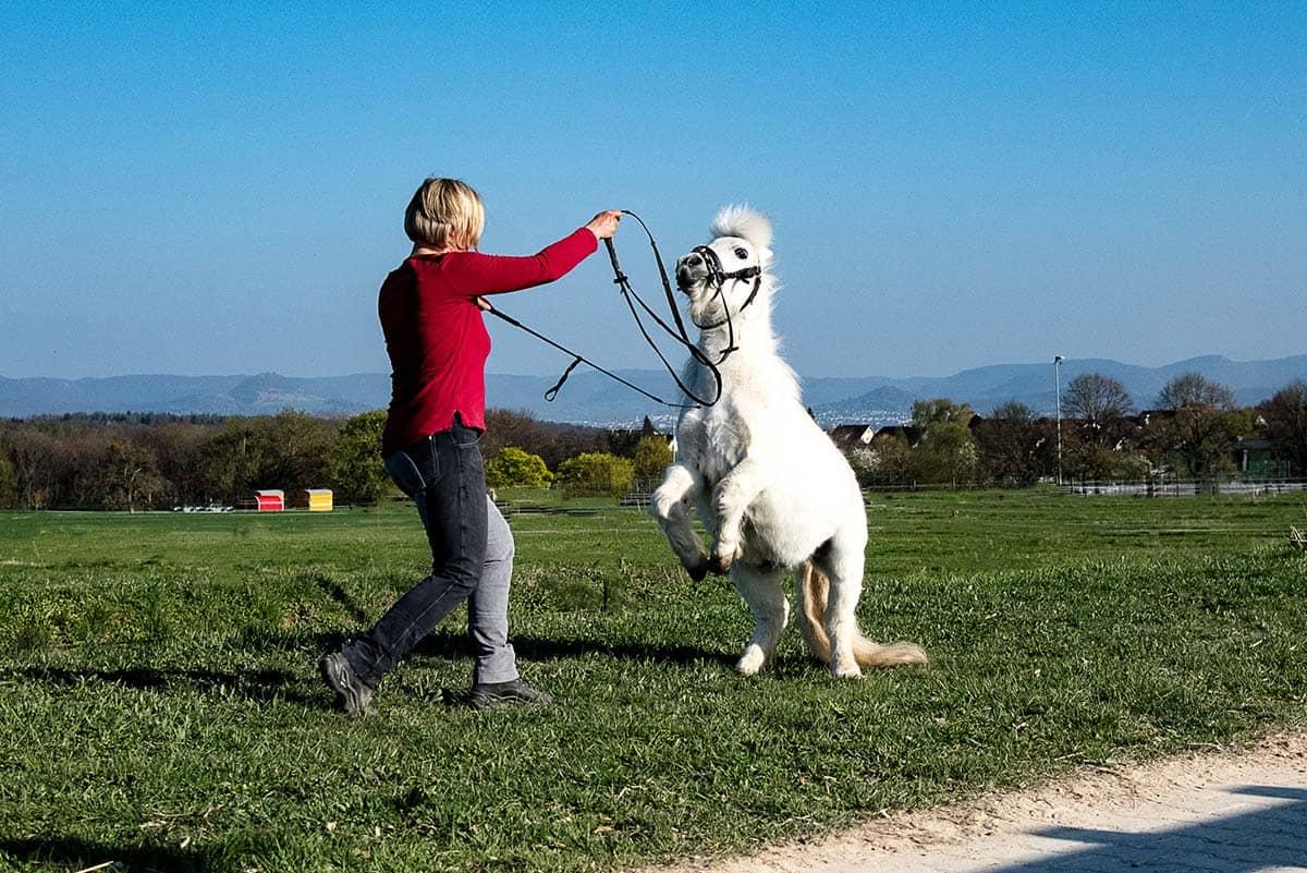 Reitanlage Pferd